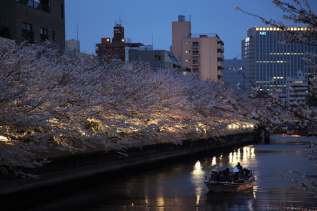 Cherry blossoms along the river in Monzen-Nakachoad.