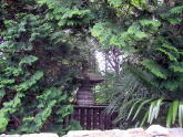 This is the best I could get for Tokugawa Iemoto's grave's photo.  Thanks, Kan'ei^ji.