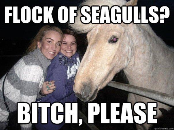 Horses flock?