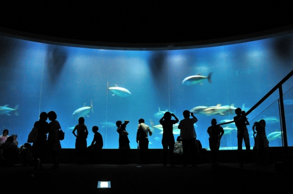 Kasai Rinkai is famous for its nature preserve, and in particular, its aquarium.