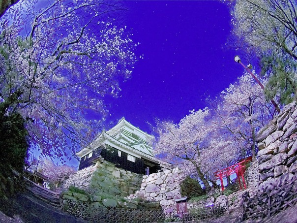 Super digital Hamamatsu Castle with cherry blossoms.