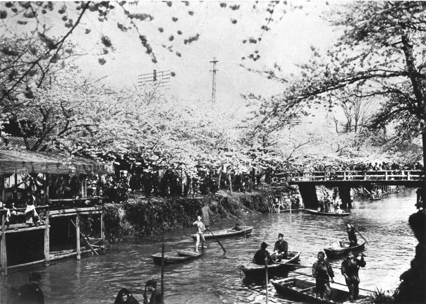 The Edo River with cherry blossoms in full bloom (late Meiji Era). Check out the driver of the boat with no passengers, but he's still straight stuntin' like a playa.