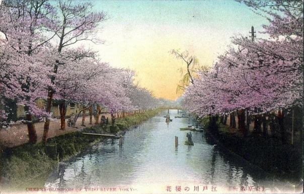Cherry blossoms at sunset or sunrise along the Edo River in the Meiji Period.