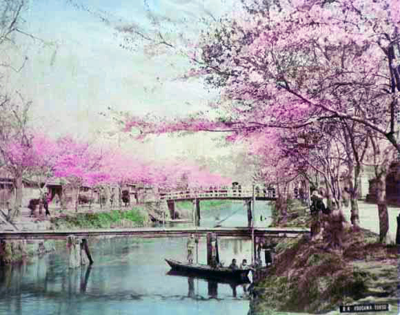 Cherry blossoms on the Edo River in the early Meiji Period.