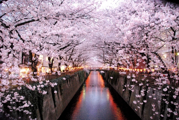 Today the Meguro River is one of the most popular spots for hanami.