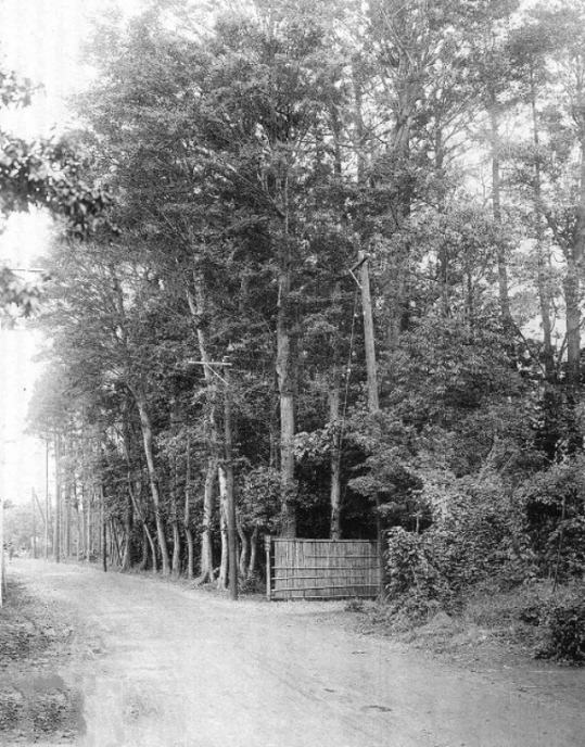 This is a picture of the estate of the first deputy mayor of Meguro-chō in 1924 (Taishō 13) which was located on Gohongi Dōri. This is 3 years before rail service came to Gohongi. Look at how tall and dense those trees are. The area that wasn't being farmed must have looked much like this.
