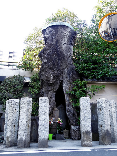 Two Koshin statues housed inside a hollowed tree.