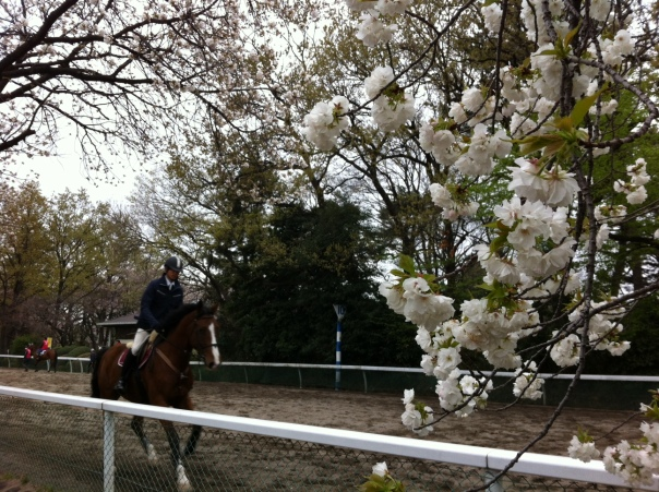 Get drunk and ride horses! Now that's what I call hanami!