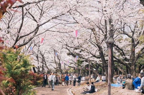 asukayama sakura
