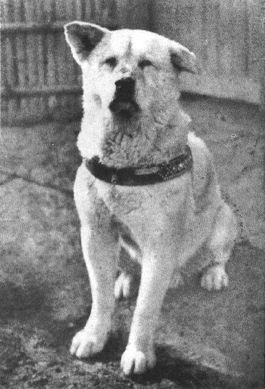 loyal hachiko.JPG